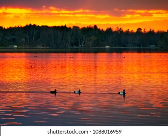 Sunset over Lake in Bemidji, Minnesota in spring with ducks swimming in foreground
