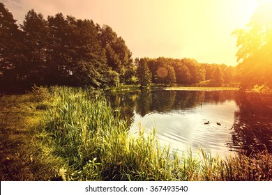 Sunset over lake with ducks. Nature conceptual image.