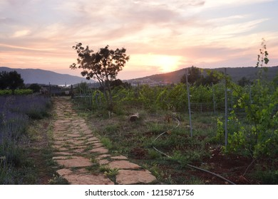 Sunset Over a Local Farm - Stari Grad, Croatia
