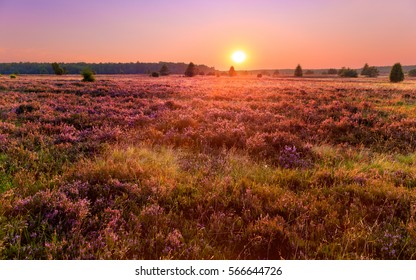 Sunset over a meadow in the Luneburg heather