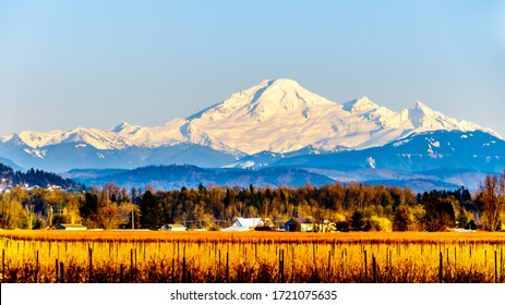 Sunset over Mount Baker, a dormant volcano in Washington State. Viewed Glen Valley near Abbotsford British Columbia, Canada under clear blue sky on a nice winter day