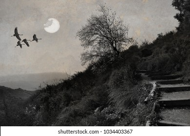 Sunset over the mountain canyon. Migratory birds flying over misty rocks. Wild tree flowering in spring nature landscape. Hiking stone stairway trail. Calming nature. Black and white. On paper texture