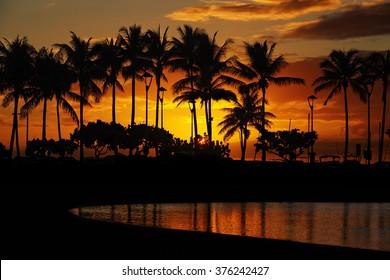 sunset over palm trees and Lagoon beach from Waikiki Beach, Honolulu, Oahu, Hawaii