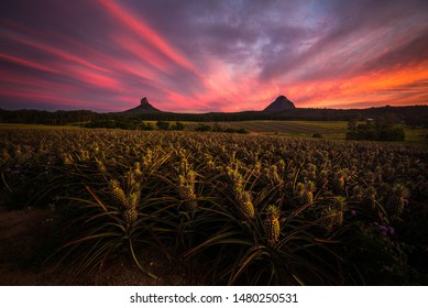 Sunset over pineapple crops at the Glass House Mountains Australia