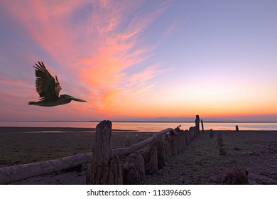 sunset over the puget sound with a pelican