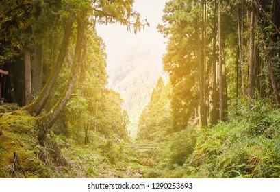 Sunset Over Rainforest At Alishan National Scenic Area, Taiwan. The Alishan National Scenic Area Is Mountain Resort And Nature Reserve. Image For Templates, Placards, Banners, Presentations, Reports.