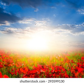 sunset over a red poppy field