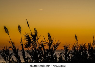 Sunset over sea with plants silhouette in front in Oeiras, Portugal