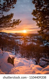 Sunset over snow landscape with trees