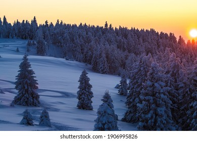 Sunset over snow-covered mountain trees in the national park
