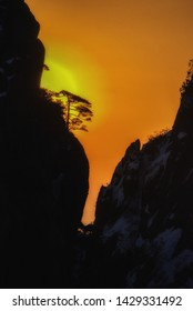 The sunset over the steep granite cliffs, the Huangshan pines (Pinus hwangshanensis) and the rhododendrons of the Huangshan Mountains (also called Yellow Mountains) of Anhui Province, China