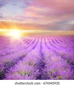 Sunset over a summer lavender field, looks like in Provence, France. Lavender field. Beautiful image of lavender field over summer sunset landscape.