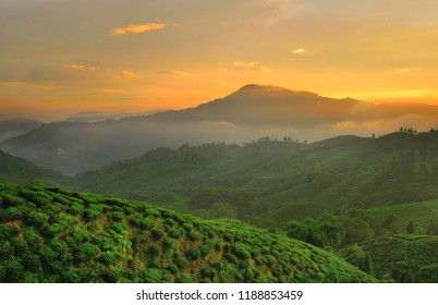 Sunset over tea gardens in Mirik.