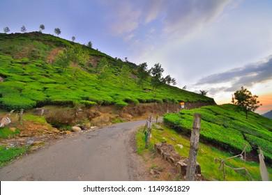 Sunset over tea gardens in Munnar, Kerala.