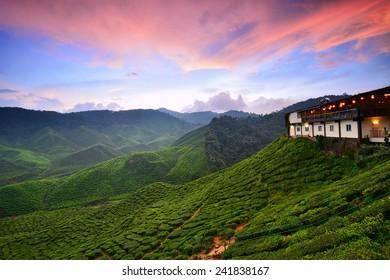 Sunset over the Tea Plantation at Cameron Highlands, Malaysia. Nature composition.