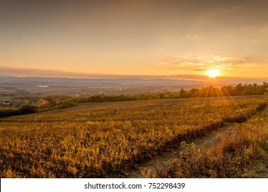Sunset over vineyard in Croatia, Slavonia region