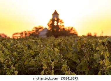 Sunset over the vineyards near Saint Emilion. Gironde, Aquitaine. France