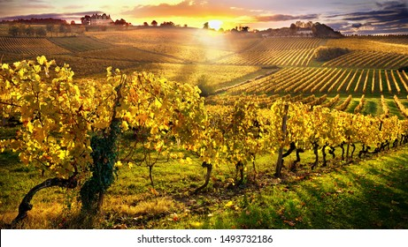 sunset over the vineyards of the South of France, bergerac