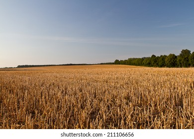 sunset over wheat field, field after the harvest