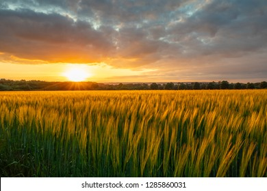 The sunset over wheat field in Germany .