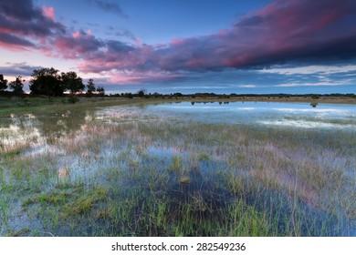 sunset over wild lake after rain, North Brabant, Netherlands