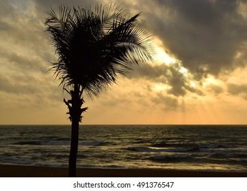 Sunset and palm tree, Negombo beach, Sri Lanka