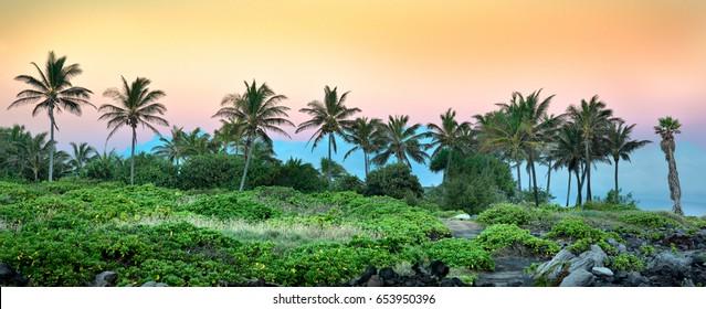 Sunset and Palm Trees, Kapalua, Maui, Hawaii