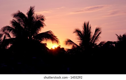 Sunset and palm trees, Lagunas de Chacagua, Mexico