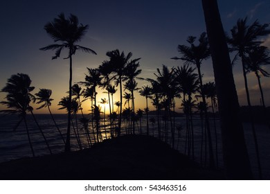 Sunset, palm trees, and the ocean view