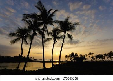 Sunset and palm trees on the Big Island, Hawaii