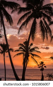 Sunset with palm trees at Papohaku beach on Molokai, Hawaii