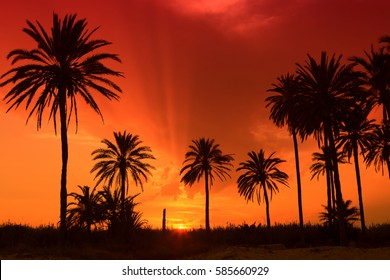 Sunset and palm trees in the tropics