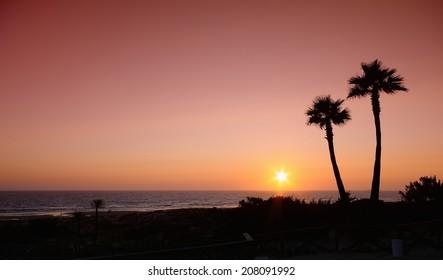 Sunset with palms in Barrosa beach,Cadiz, Spain.