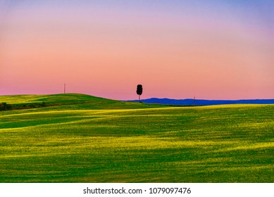 sunset panorama of the Brunello wine lands in the spring with hills covered with soft green grass in the town of Montalcino in the Siena area during the hot spring