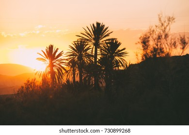 Sunset panorama with date palm trees in Tabernas desert, Almeria. Spain.