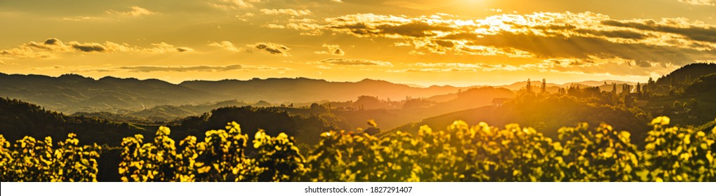 Sunset panorama of wine street on Slovenia, Austria border in Styria. Fields of grapevines and lush forests.