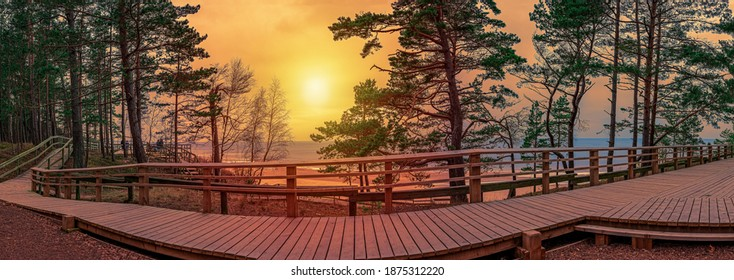 Sunset panorama of wooden path near Baltic sea coast. Panorama of coniferous forest with pine trees and Baltic sea coast with white sand beach and blue sea.