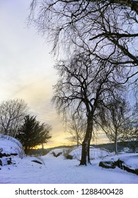 Sunset in the park during winter. Beautiful landscape of Larvik, Norway.