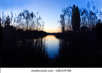Sunset at park lake with black sillhouete plants in foreground