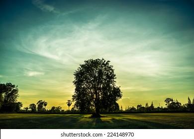 Sunset in park. Light of setting sun passes through tree's crown.