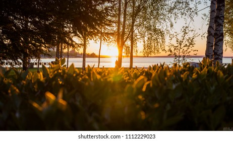 Sunset in the park on the shore of Lake Onega. Karelia