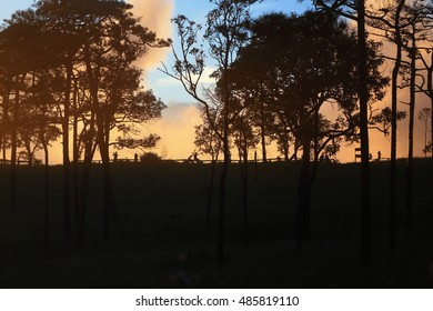 Sunset Pine forest at Phu soi dao Nation park, Thailand