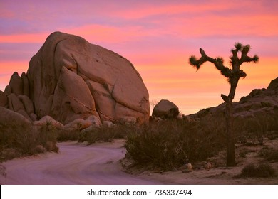 Sunset pink sky at Joshua Tree National Park in the US showing a large piece of brown stone near skull rock and a Joshua tree.