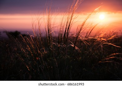 Sunset in pink tones in the mountains of Crimea with meadow grasses in the foreground