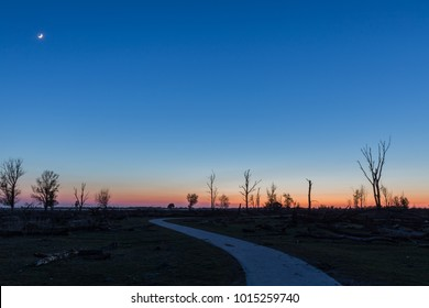Sunset in plain landscape with barren trees. Oostvaardersplassen nature reserve, The Netherlands