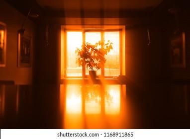 Sunset plant near windows background