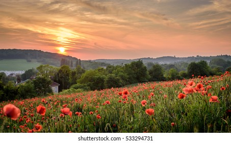 sunset at provins poppy flower