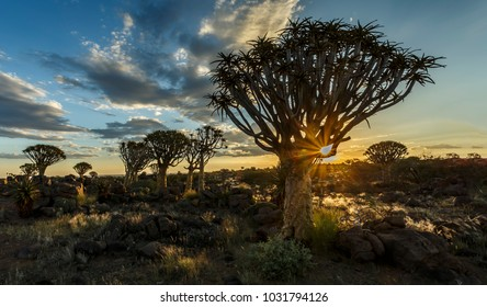 Sunset at Quivertree Forest, Keetmanshoop, Namibia, Southern Africa.