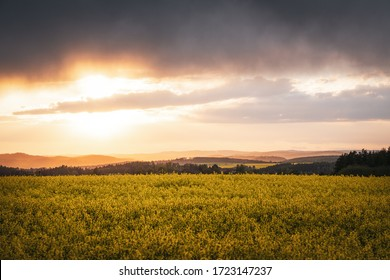 Sunset with rain clound over yellow blooming rapeseed field at springtime. Plant for biofuel production. Hroznice, Zbizuby, Czech republic.