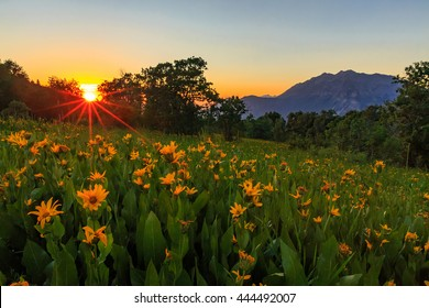 Sunset rays with wildflowers on Squaw Peak, Provo, Utah, USA.